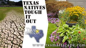 texas native plants environment u0026 development nctcog org