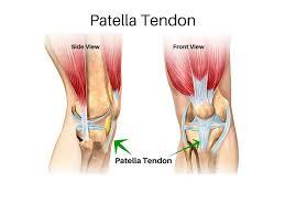 Lateral Patellar Ligament Patellar Tendon Tears Howard J Luks Md