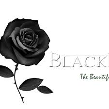 black roses black connections the beautiful ones