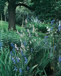 garden tour a flowering home martha stewart