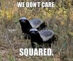 Meme Honey Badger - 123 best honey badgers images on pinterest honey badger animal