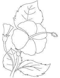 coloring pages download free hibiscus brilliant coloring page download free hibiscus