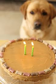 birthday cakes for dogs peanut butter carrot dog birthday cake stick a fork in it