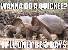 Funny Sexual Memes Pictures - it would suck to be a female turtle i bet funny sex memes