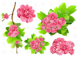 15 spring flowers clip art vector images free clip art