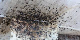 Will Heat Kill Bed Bugs Bed Bug Exterminator Heat Treatment Bed Bugs