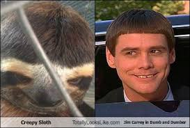 Jim Carey Meme - creepy sloth totally looks like jim carrey in dumb and dumber
