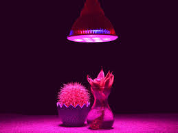 Indoor Plant Light by What Are The Main Types Of Grow Lights Beginner U0027s Guide