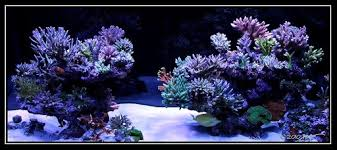 Reef Aquascape Designs Reef Aquascaping Designs Live Rock Aquascaping Page 2 Reef