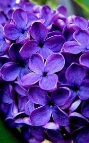 dee acetate round frame u2026 tattoos pinterest lilacs wedding