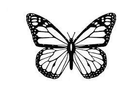 white butterfly free illustrations on pixabay