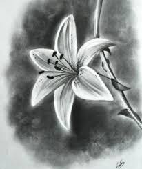 pencil drawing flower photos pencil drawing collection