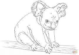 koala bear coloring koalas coloring pages free coloring pages