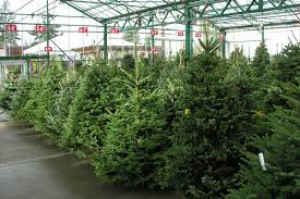 fresh cut trees are available at green acres nursery