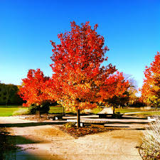 pretty tree diaries