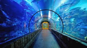 Mandalay Bay Buffet Las Vegas by Shark Reef U0026 Aquarium In Las Vegas U2013 Mandalay Bay Mandalay Bay