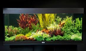Fake Plants How To Set Up An Aquarium With Plastic Plants U2014 Practical
