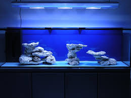 Reef Aquascape Designs Minimalist Aquascaping Page 31 Reef Central Online Community