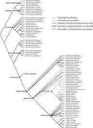 phylogenetic taphonomy a statistical and phylogenetic approach