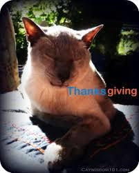 happy catsgiving cat wisdom 101