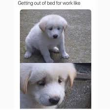 Get Out Of Bed Meme - dopl3r com memes getting out of bed for work like