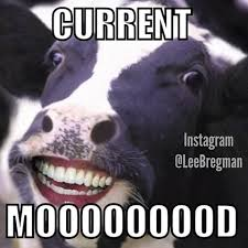 Moo Meme - funny memes posted daily leebregman instagram photos and videos