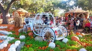 Dallas Arboretum And Botanical Garden Pumpkin In Dallas Arboretum And Botanical Garden