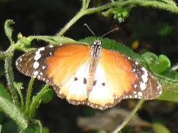 uganda butterfly watching tour 18 days virtuoso africa safaris