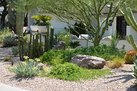 creating a lush desert oasis in the urban landscape green living