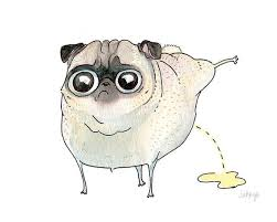 Dog Peed On Bed Best 25 Dog Ideas On Pinterest Dog Smell Dog On