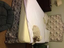 Tempur Pedic Dog Bed Tempur Pedic Mattress Worth The Money