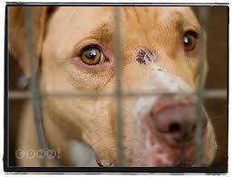 animal shelter tea u0026 tan lines