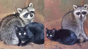 knoxville animal control rescues kitten and baby raccoon duo from