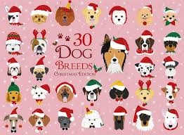 set of 30 breeds with and winter themes stock vector