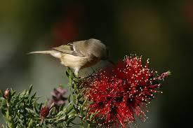 Flower And Bird - file bird exploring a flower jpg wikimedia commons