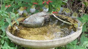 keep your bird bath full southern cross