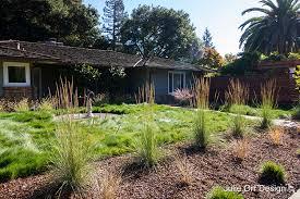 ornamental grass maintenance julie orr design