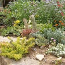 natursteinmauern bepflanzen mein schöner garten