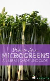 69 best garden guides images on pinterest