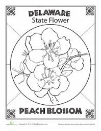 delaware state flower interesting facts about delaware state flower