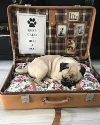 pug home decor the best idea for monday pug pugs dog dogs mops carlino