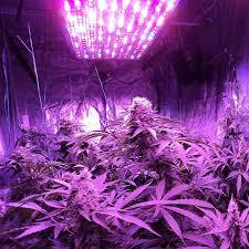 1000 watt led grow lights for sale 1000 watt led grow lights amazing lighting