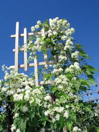 trellis plants wooden u2013 outdoor decorations
