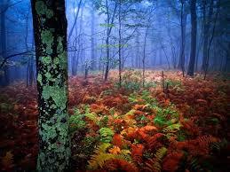 Pennsylvania scenery images 145 best beautiful pennsylvania countryside images jpg