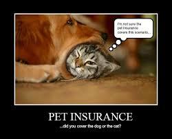 Pet Insurance Meme - cat life insurance