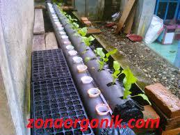 cara membuat cairan hidroponik cara membuat pupuk organik cair untuk tanaman hidroponik
