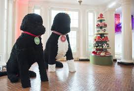 White House Christmas Decorations 2015 Images by White House Christmas Decorations White House Christmas Decorations