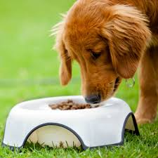 feeding a bedlington terrier the 8 biggest myths about dog food american kennel club