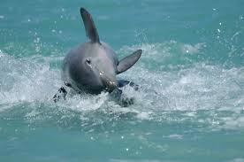 the smart way to view wild dolphins u2013 mission blue
