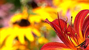 flower gardens perennial flower gardens youtube
